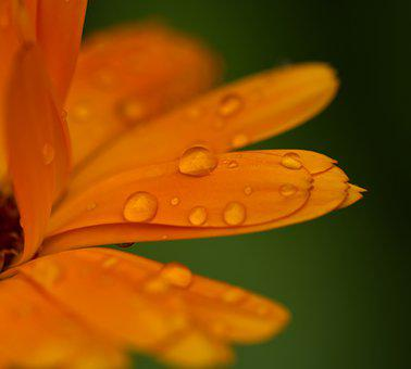 Flower, Orange, Water, Drop Of Water, Rain, Nature