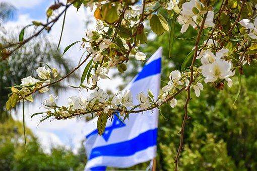 Israeli Flag, Flowers, Spring, Trees, Nature, Blossom