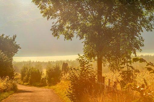 Dawn, Haze, Ground Fog, Nebelschleier, Field, Fence