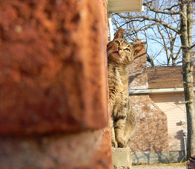 Cat, Perspective, Cute, Pet, House, Brick, Looking Up