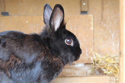 Hare, Rabbit, Rabbit Ears, Animal, Easter, Pet, Ears