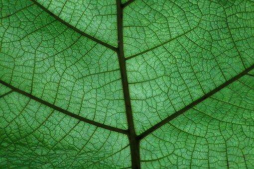 Leaf, Plant, Structure, Background, Green, Color