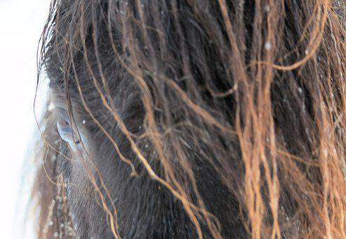 Eye, Horse, Black, Snow, Head, Portrait, Nature, Pony