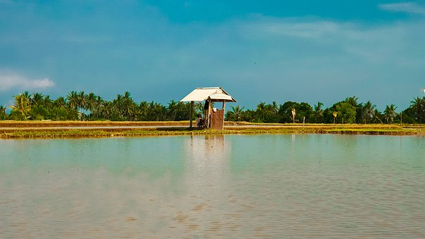Nature, Sky, Blue, Water, Rice Field