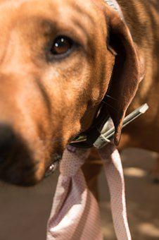 Dog, Animal, Pet, Portrait, Animal Portrait, Tie, Snout