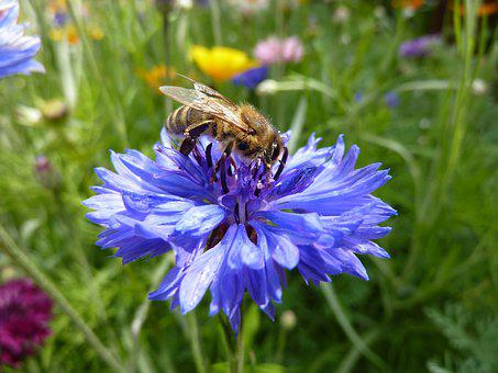 Summer Flowers, Wild Flowers, Insect, Summer, Flowers