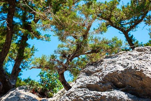 Nature, Tree, Trees, Green, Sky, Environment, Idyllic