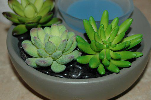 Succulent, Wax, Warmer, Plant, Rosette, Exotic, Spring