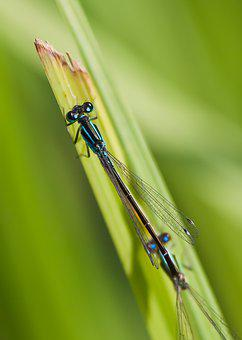 Dragonfly, Water, Waters, Insect, Nature, Wing, Summer