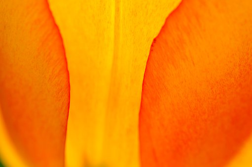 Nature, Abstract, Background, Flower, Macro, Orange