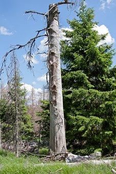 Tree, Bark Beetles, Pest, Waldsterben, Texture, Wood