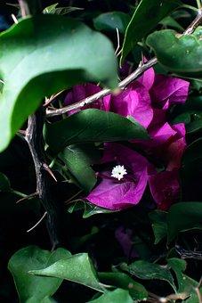 Flowers, Dark, Moody, Flower Flowers, Spring, Bloom