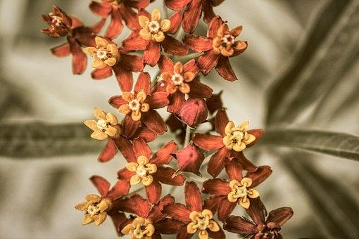 Yellow, Exotic Flower, Blossom, Bloom, Garden, Spring