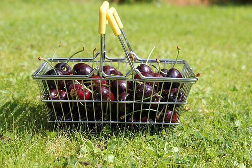 Cherry, Wire Basket, Lawn, Grass, Fruit, Cherries, Ripe