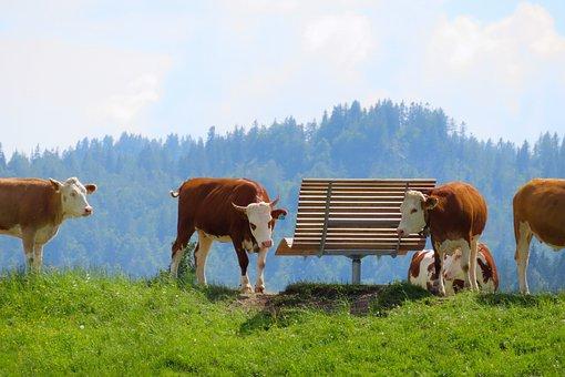 Landscape, Nature, Animals, Cow, Alm, Bank, Rest, Break