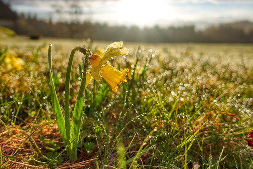 Easter, Flower, Spring, Plant, Dew, Drop, Sunrise