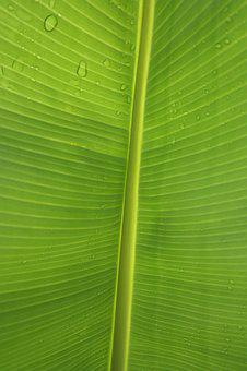 Leaf, Green, Structure, Banana Leaf, Drop Of Water