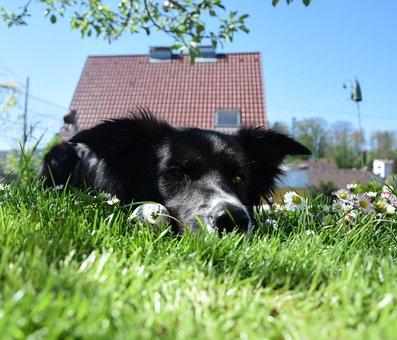 Easter, Ostereier Seeking, Easter Eggs, Easter Dog
