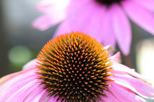 Blossom, Bloom, Pollen, Flower, Nature, Plant, Close Up