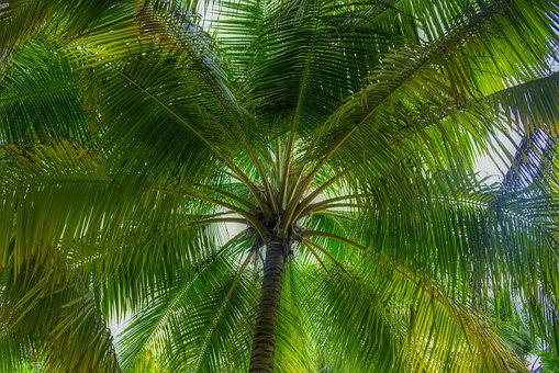 Forest, Palm Trees, Exotic, Of Course, Maldives, Flora