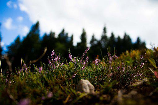 Heather, Grass, Trees, Nature, Macro, Landscape, Forest
