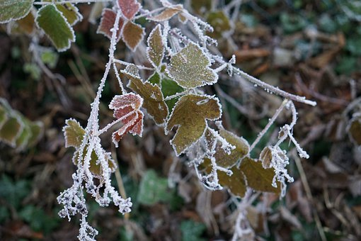 Ice, Leaf, Winter, Nature, Frozen, Frost, Leaves
