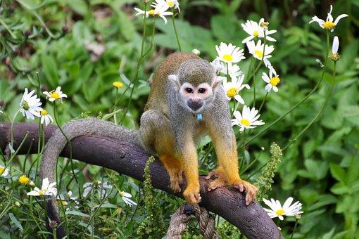 Monkey, Funny, Animal, Cute, Charming, Happy, Fun