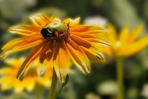 Nature, Garden, Flower, Blossom, Bloom, Zinnia, Hummel