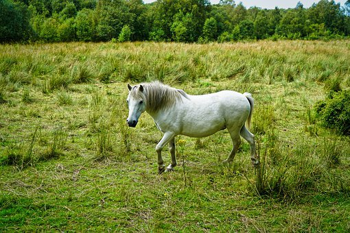 Equine, Horse, Animal, Nature, Horses, Equestrian