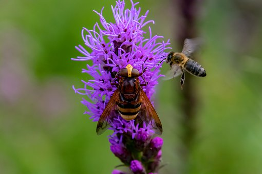 Hoverfly, Flower, Insect, Blossom, Bloom, Summer, Plant