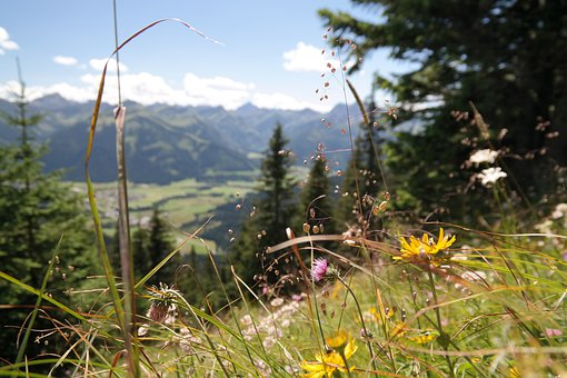 Mountain Meadow, Flowers, Flower Meadow, Alpine, Allgäu