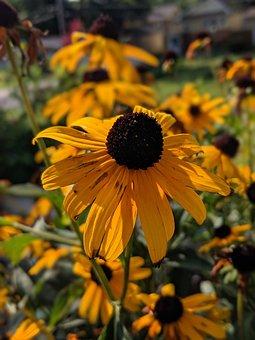 Flower, Blossom, Bloom, Nature, Petals, Spring, Garden