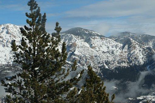 Pine Tree, Montania, Sky