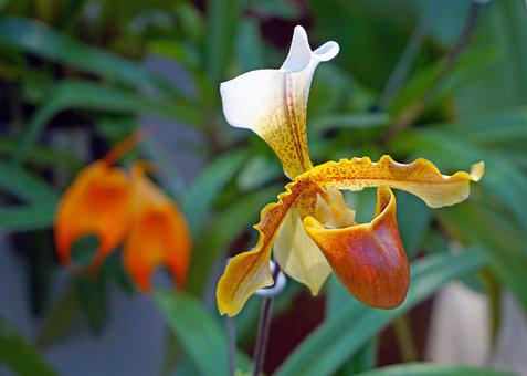 Show, Flowers, Orchid