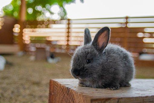 Rabbit, Small, Animal, Ears, Close Up, Furry