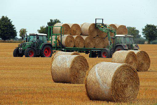 Harvest, Hay, Agriculture, Straw, Field, Summer