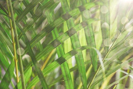 Leaves, Palm, Sunlight, Wallpaper, Background, Green