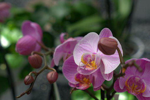 Orchid, Flower, Blossom, Bloom, Close Up, Tropical