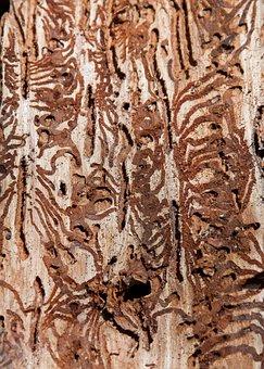 Bark Beetles, Pest, Waldsterben, Texture, Wood, Pattern