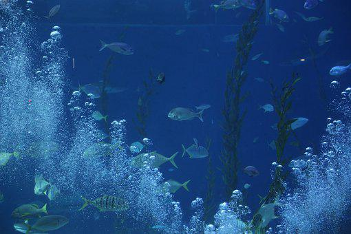 Aquarium, Waterworld, Sea, Fish, Nature, Aqua