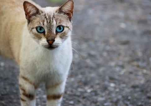 Cat, Feline, Pet, Domestic, Animals, Kitten, Cute