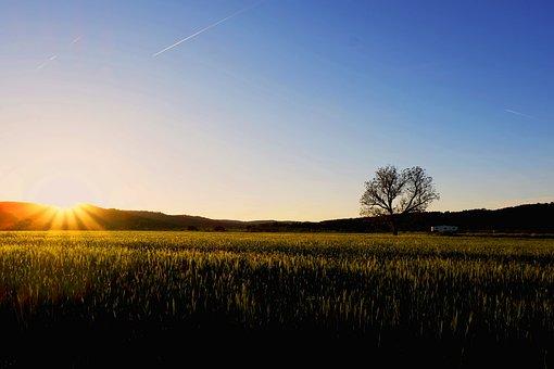 Sunrise, Field, Landscape, Trees, Fog
