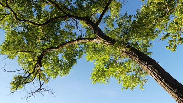 Wood, Sky, Foliage, Nature, Landscape, Mood, Clouds