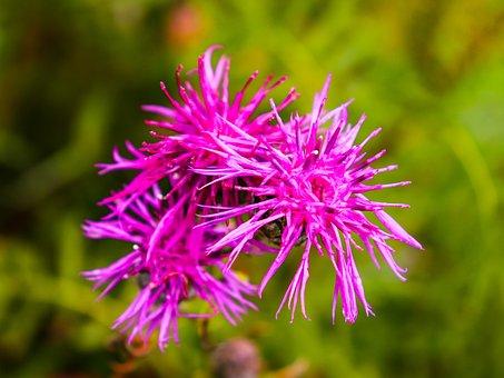 Flowers, Village, Flower, Orange, Green, Meadow