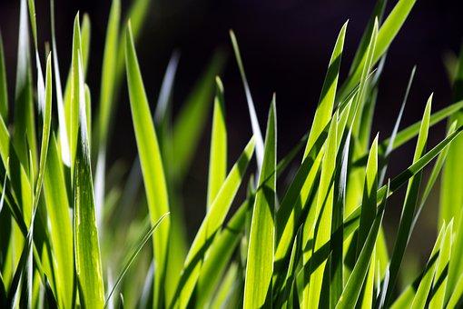 Green, Grass, The Background, Nature, Light, Pattern