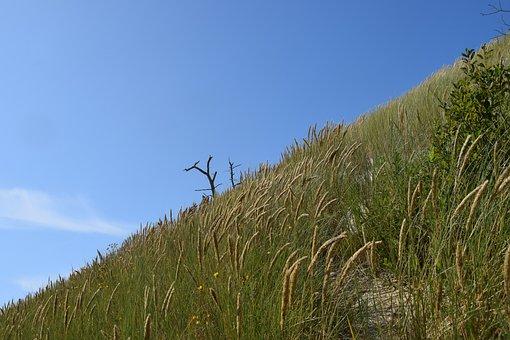 Landscape, Grass, Sky, The Sand Dunes