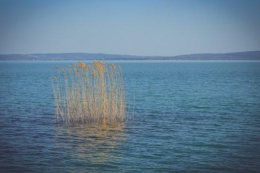Lake Balaton, Summer, Lake, Water, Nature, Landscape