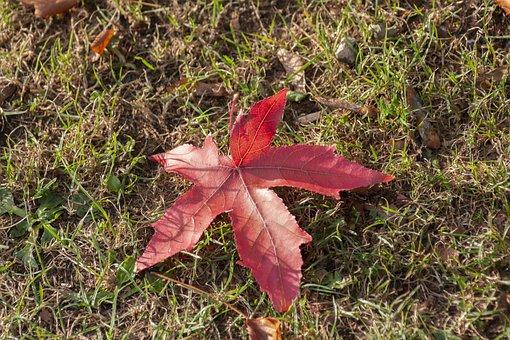 Leaf, Red, Leaves, Nature, Tree, Autumn, Plants