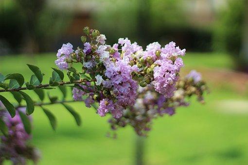 Garden, Plant, Nature, Flower, Natural, Green, Pink