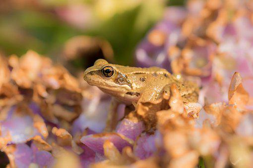 Frog, Close Up, Animal, Water, Amphibian, Pond